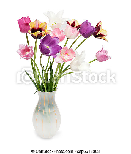 bouquet of tulips on a white background - csp6613803
