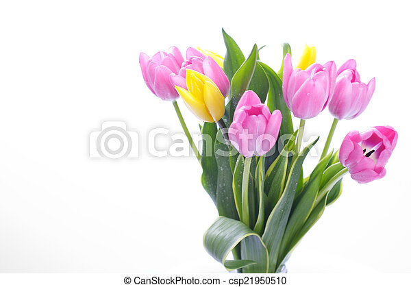 bouquet of tulips - csp21950510