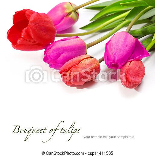 bouquet of tulips - csp11411585
