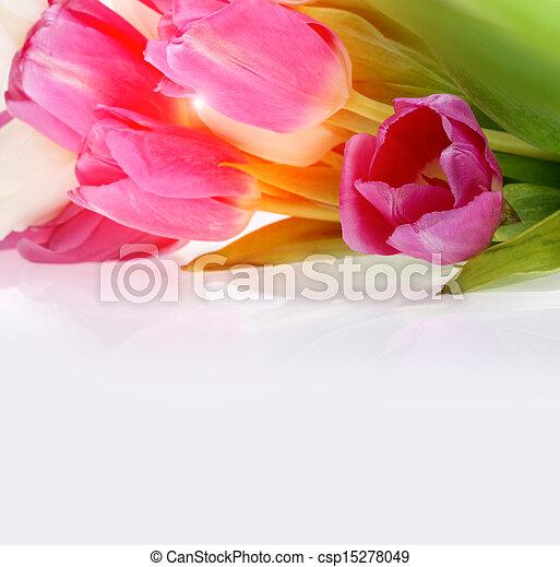 bouquet of tulips - csp15278049