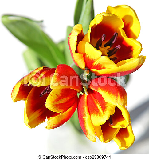 Bouquet of tulips - csp23309744