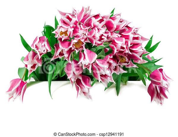 Bouquet of tulips - csp12941191