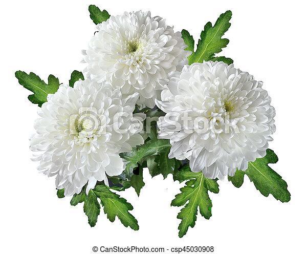 Bouquet of white chrysanthemum flowers three white chrysanthemums bouquet of white chrysanthemum flowers csp45030908 mightylinksfo