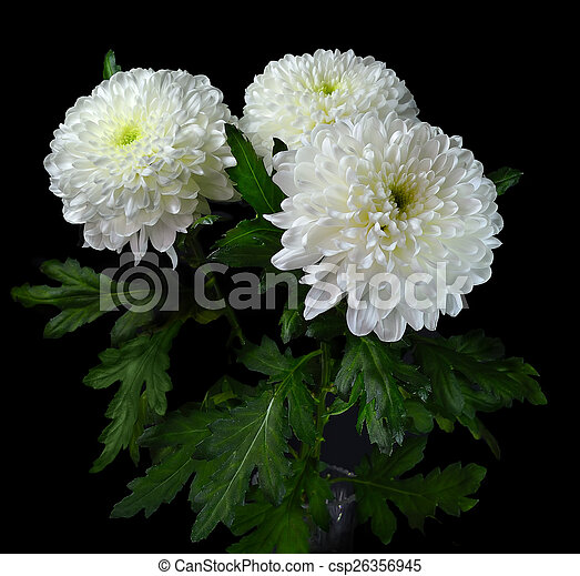 Bouquet Of White Flowers Bouquet Of White Chrysanthemums In A