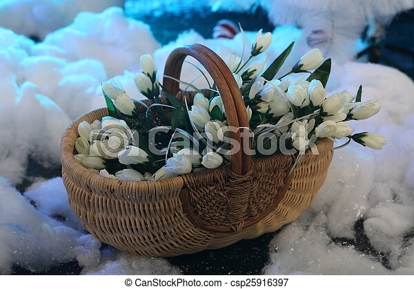 Bouquet of white tulips in a wattled basket on snow - csp25916397