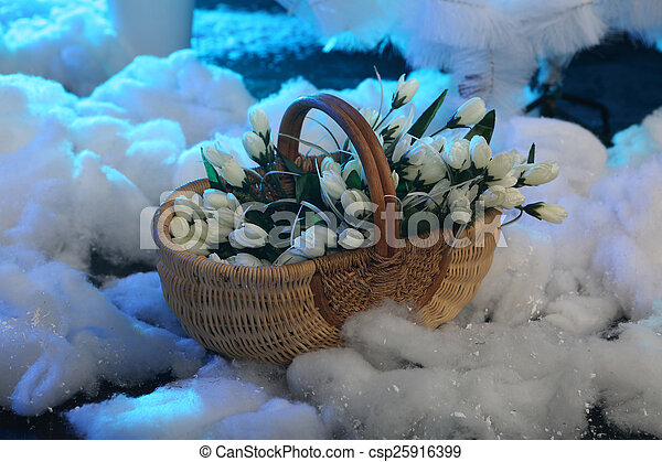 Bouquet of white tulips in a wattled basket on snow - csp25916399