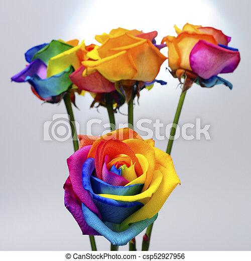 Bouquet Rose Arc En Ciel Arc En Ciel Fleur Colore Bouquet