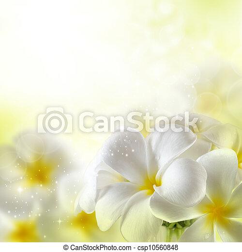 bouquetten, bloemen, plumeria - csp10560848