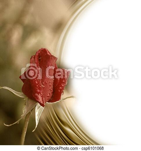 bourgeon, carte, romantique, rose rouge - csp6101068