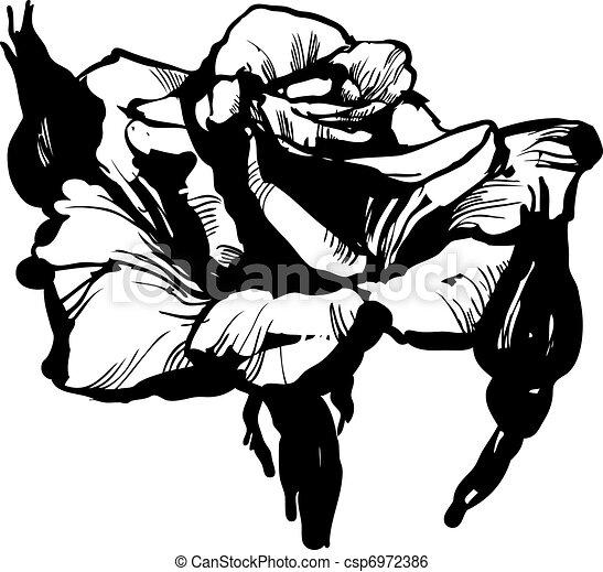 Bourgeon rose magnifique croquis rose noir magnifique - Dessin bourgeon ...
