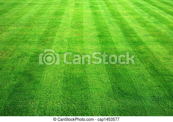 Bowling green grass background. - csp1453577