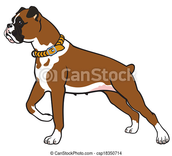 boxer dog side view image isolated on white background rh canstockphoto com boxer dog clip art free