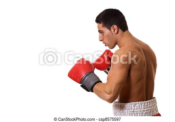 Boxer - csp8575597