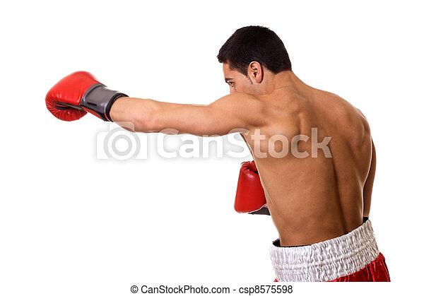 Boxer - csp8575598