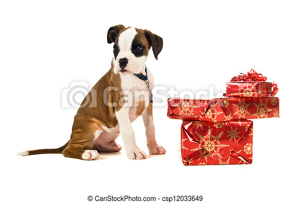 Boxer puppy sat next to Christmas presents isolated on a white background - csp12033649
