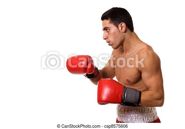 Boxer - csp8575606
