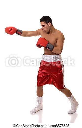 Boxer - csp8575605