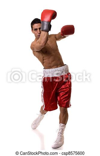 Boxer - csp8575600