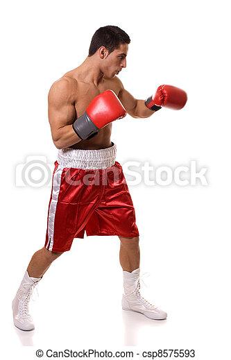 Boxer - csp8575593