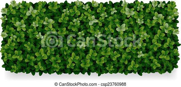 boxwood decorative fence - csp23760988