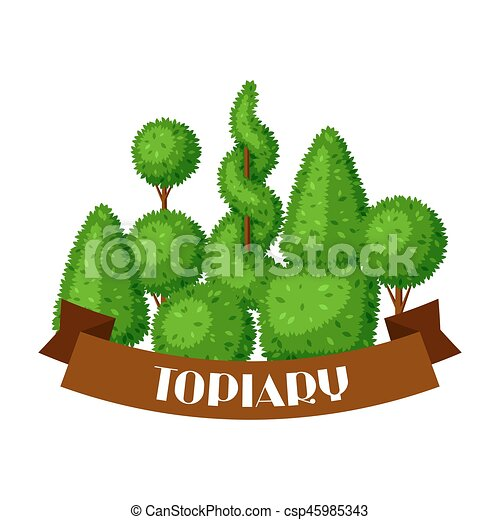 trends decor pictures interesting decorative trees landscaping evergreen for ornamental small orname and dwarf