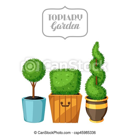 Boxwood Topiary Garden Plants Decorative Trees In Flowerpots Vector