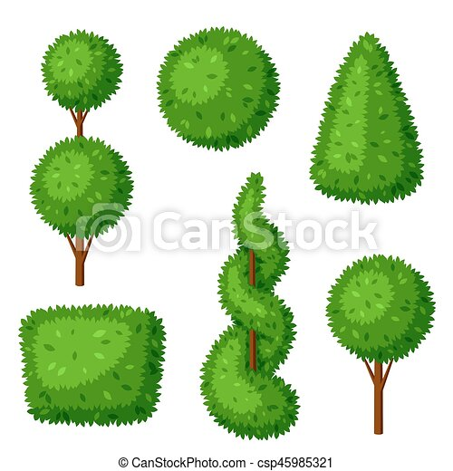 zone evergreen trees small ornamental landscaping decorative decor for dogwood