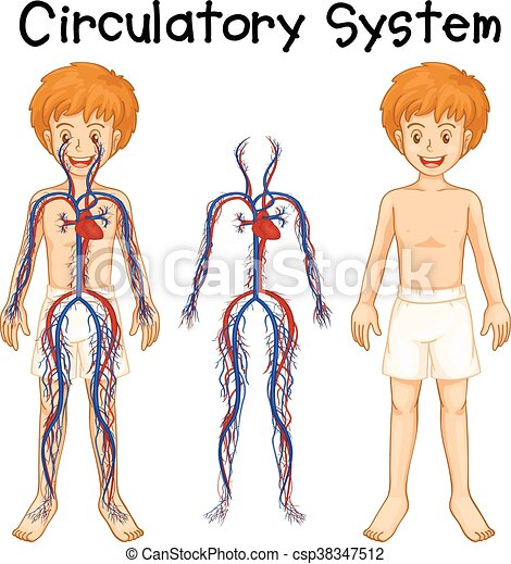 boy with circulatory system illustration vector clip art search rh canstockphoto com