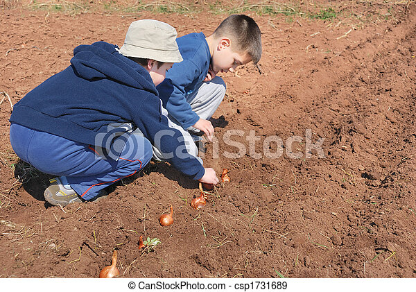 Boys sowing onion - csp1731689