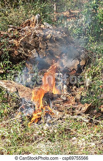 brûlé, brûler, -, prohibition, forêt verte, gaspillage - csp69755566