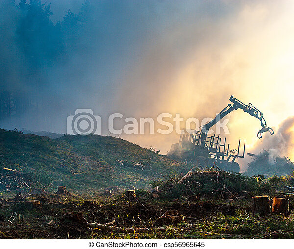 brûlé, brûler, tractor., waste., forêt, fumée, découpage - csp56965645