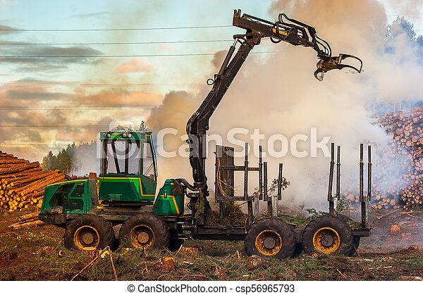 brûlé, brûler, tractor., waste., forêt, fumée, découpage - csp56965793
