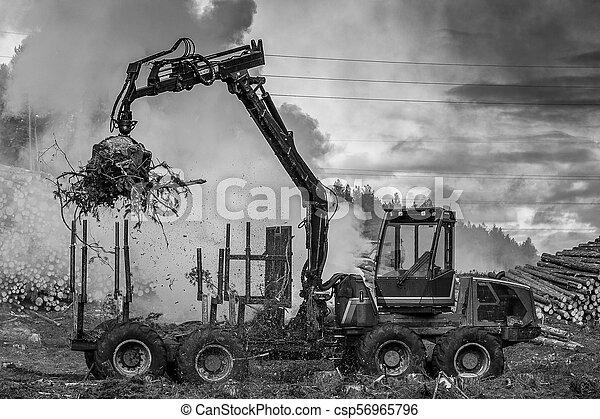 brûlé, brûler, tractor., waste., forêt, fumée, découpage - csp56965796