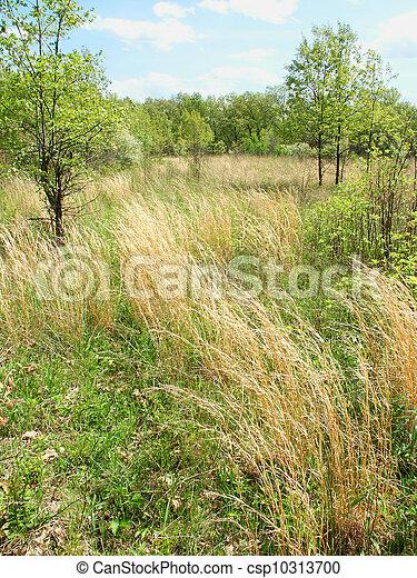 Braidwood Dunes and Savanna Nature Preserve - csp10313700