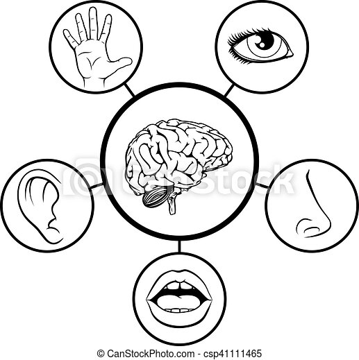 brain and five senses a science education illustration of clip rh canstockphoto com five senses clipart five senses clip art preschool