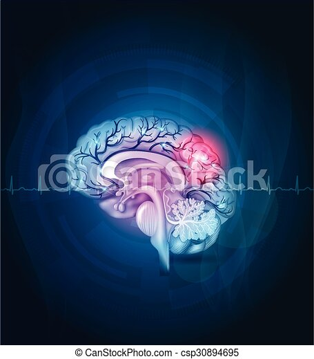 Brain cross section, arteries abstract background - csp30894695