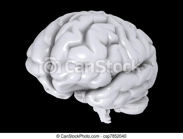 brain - csp7852040