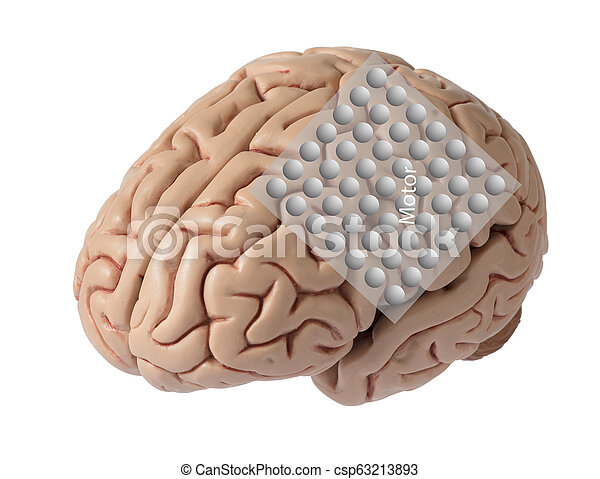 Brain model with graphic of electrode recording covering motor cortex - csp63213893