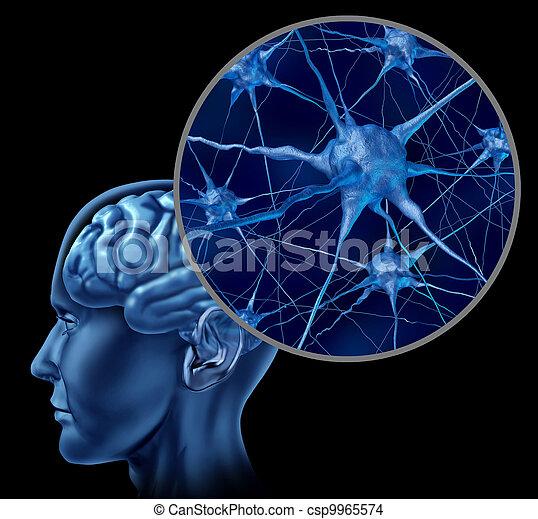 Brain Neuron Chart - csp9965574