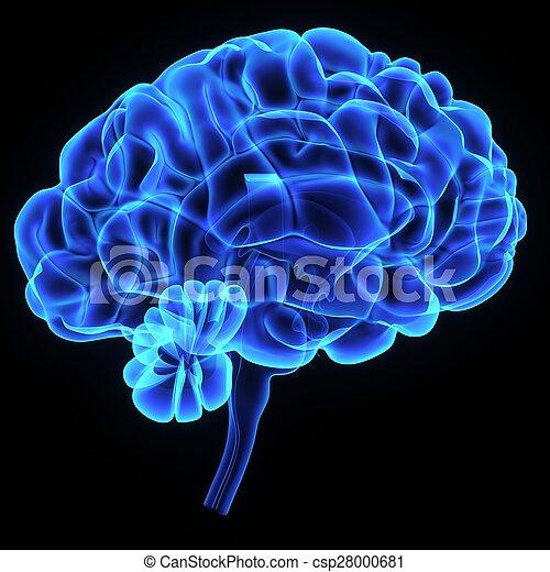 Brain - csp28000681