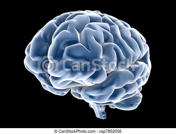 brain - csp7852056