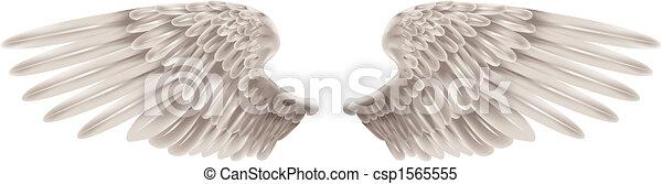 branca, asas - csp1565555