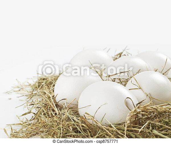 branca, ovos - csp8757771