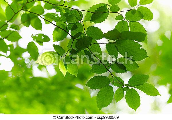 branch., 绿色 - csp9980509