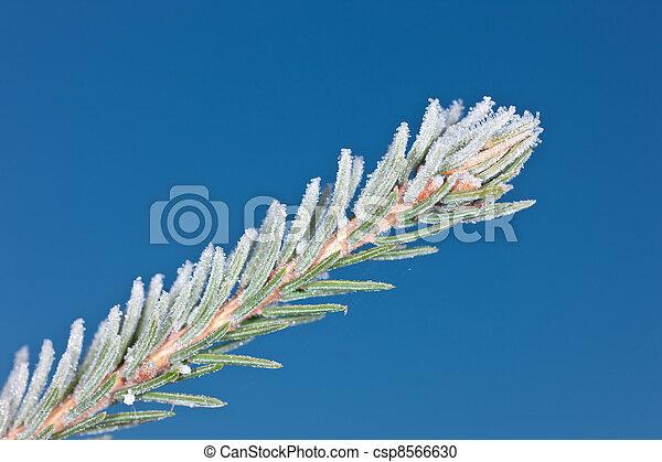 branch in hoarfrost - csp8566630