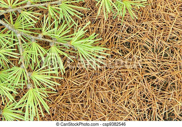Branch of a larch on a background of dry needles - csp9382546