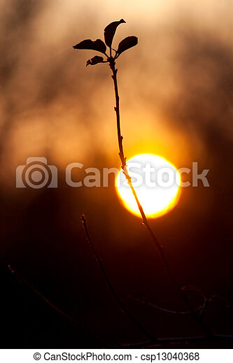 Branch of a tree against of the setting sun - csp13040368