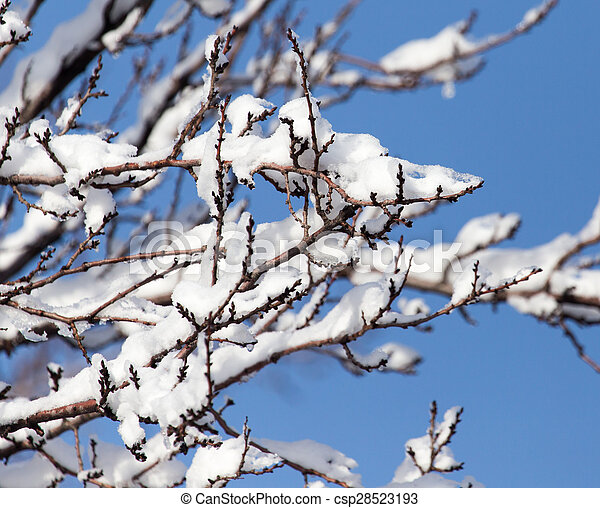 branch of a tree in the snow against the blue sky - csp28523193