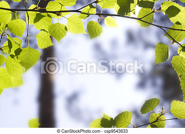 Branch of a tree  - csp9543633