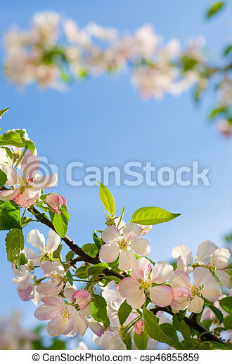Branch of an apple tree against a blue sky - csp46855859